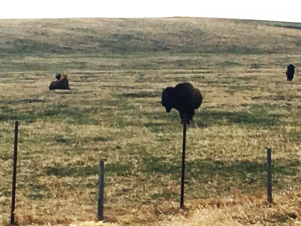 Levitating Buffalo