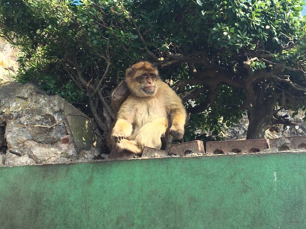 The little monkeys