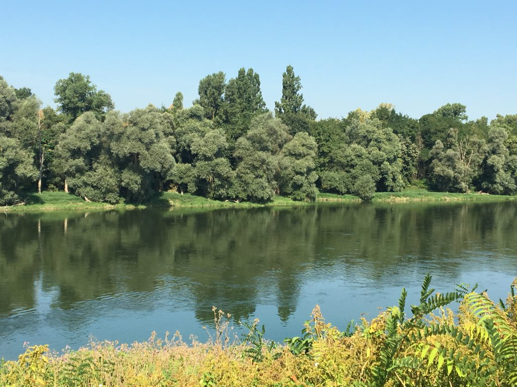 The path along the Rhine