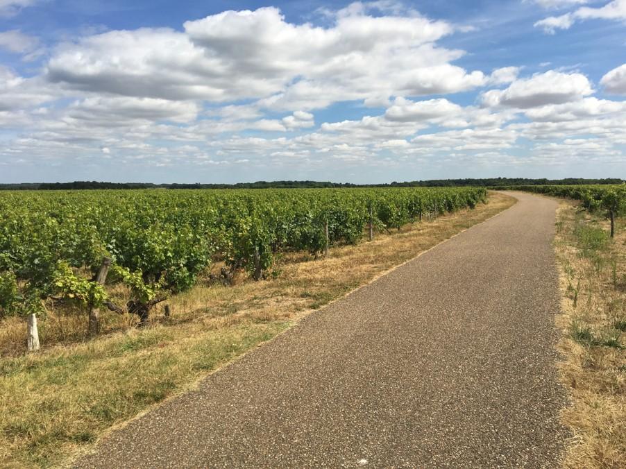 Riding through more vinyards