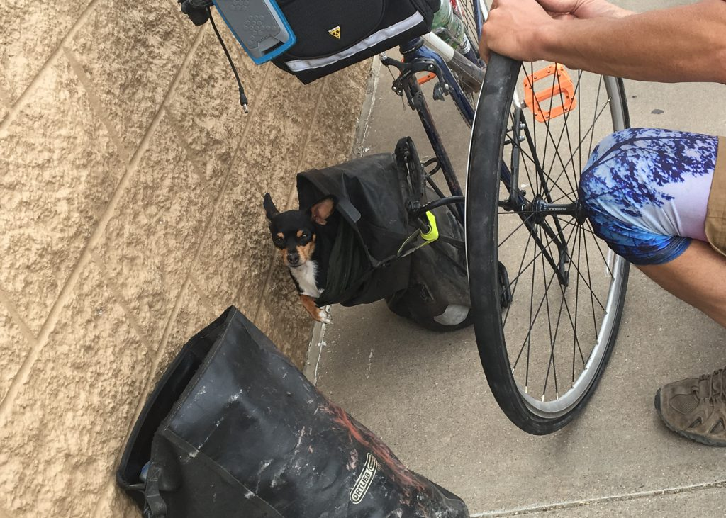 Bicycle dog